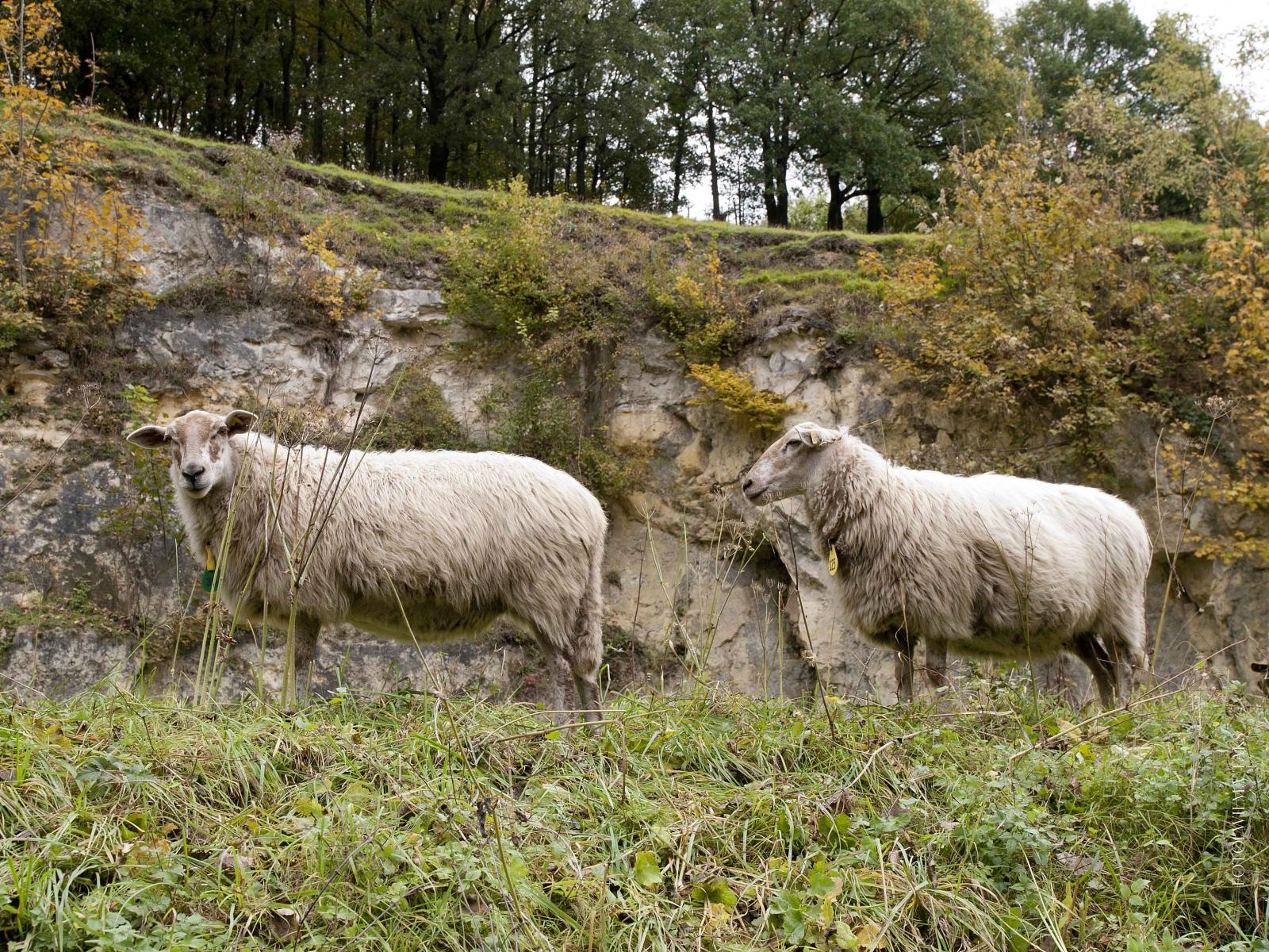 Foto´s Peer 2011 Julianagroeve en Koeberg (7)